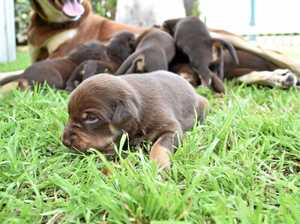Dog breeding rules change is welcome