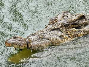 No evidence of crocs nesting in Mary River
