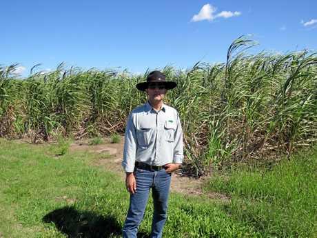 Cane farmer Frank Perna said the recent rain had