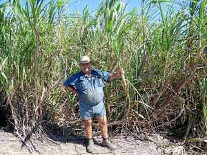 All is not lost for cane farmers