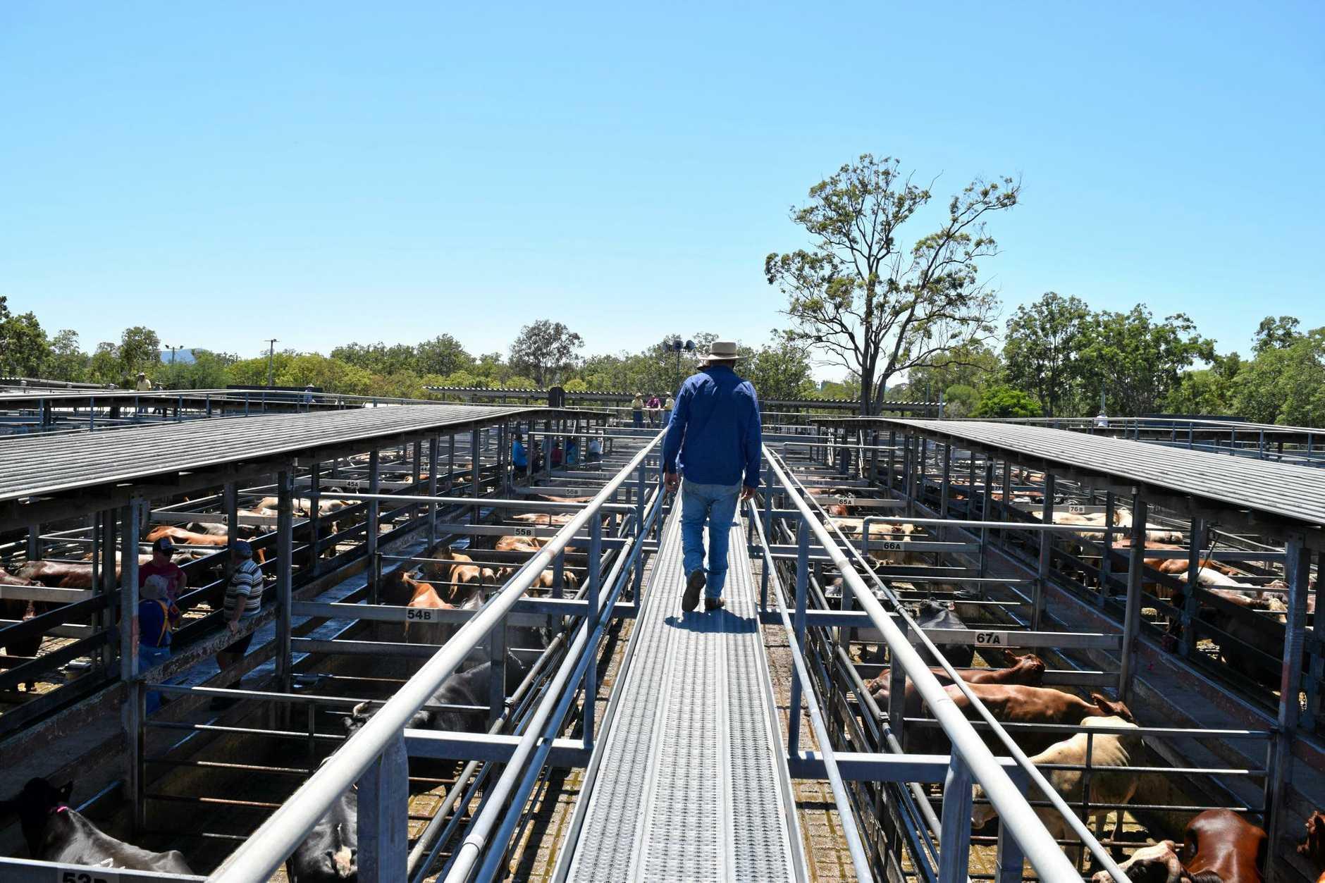 Northern Rivers Livestock Exchange at Casino.