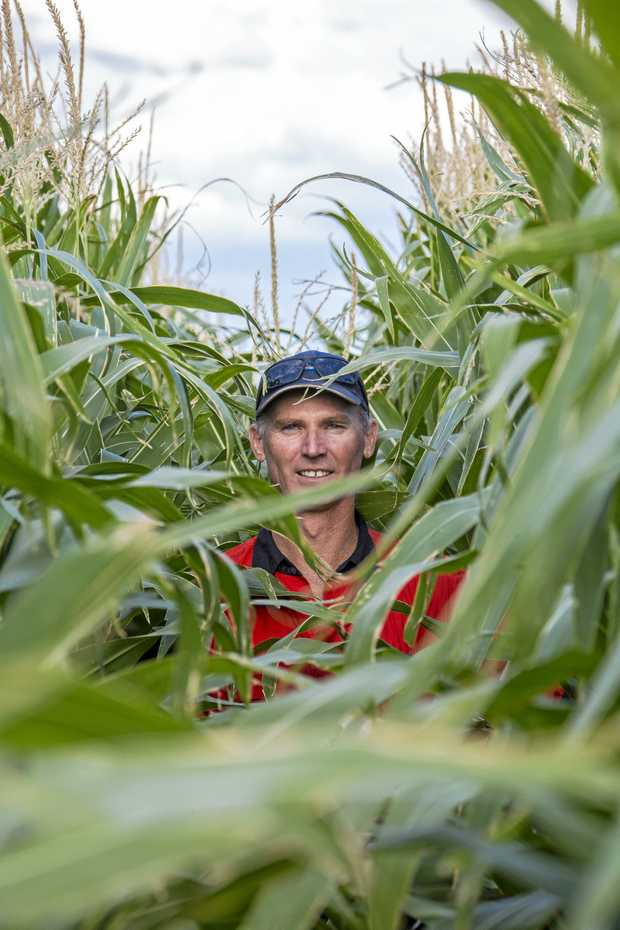 IN THE THICK OF IT: Steve Erbacher, manager of Acland Pastoral Company near Oakey.