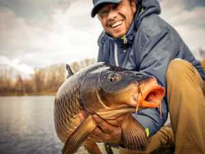 Carp might by great fun to catch but they're destroying Australia's watercourses.