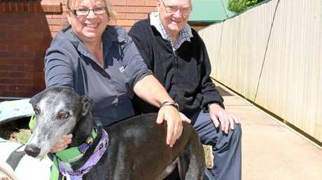 Mt Lofty Heights Nursing Home Director of Nursing Cindy Pitt with resident Lenny McHugh enjoys the company of the facility's resident pet, Sammy the greyhound.