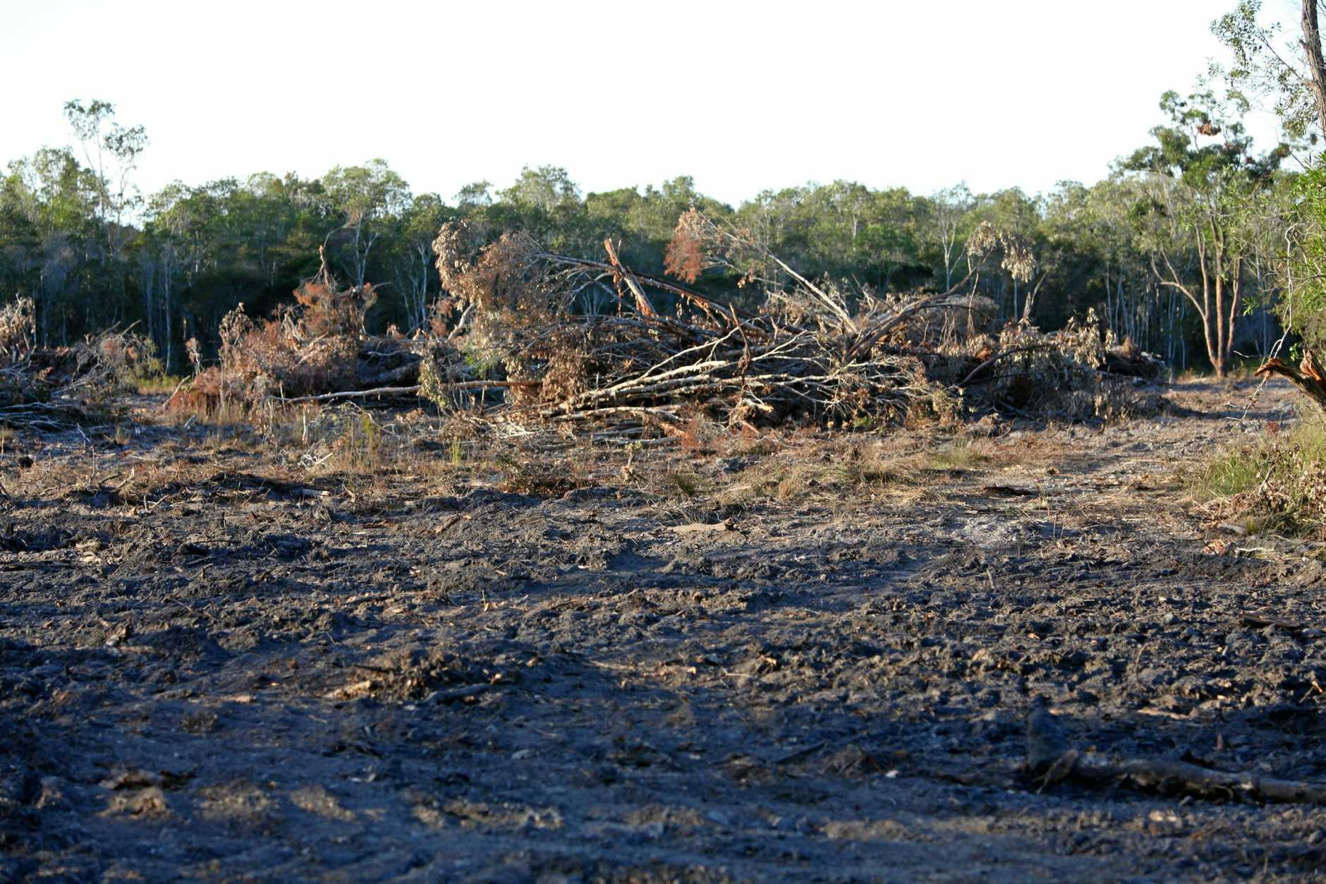 CLEAR FELLED: Reports of land clearing rising in Queensland over recent years has got landholders and conservationists butting heads with policy makers over the growing tensions surrounding the issue.