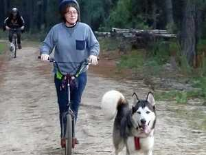 Sled dogs race near Stanthorpe