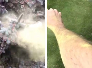 Pollen cloud blankets yard in Canada