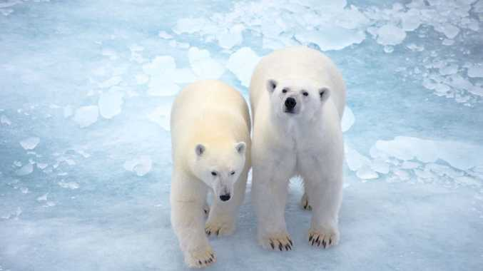 You'll see plenty of these guys at Svalbard. Photo: Contributed