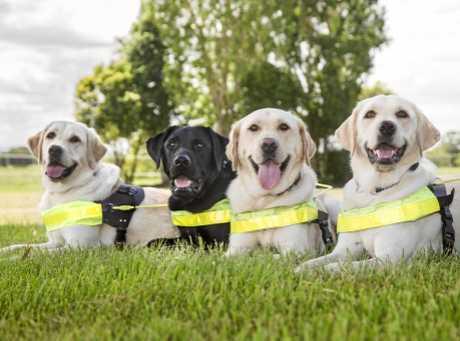 Toowoomba's new guide dog team.