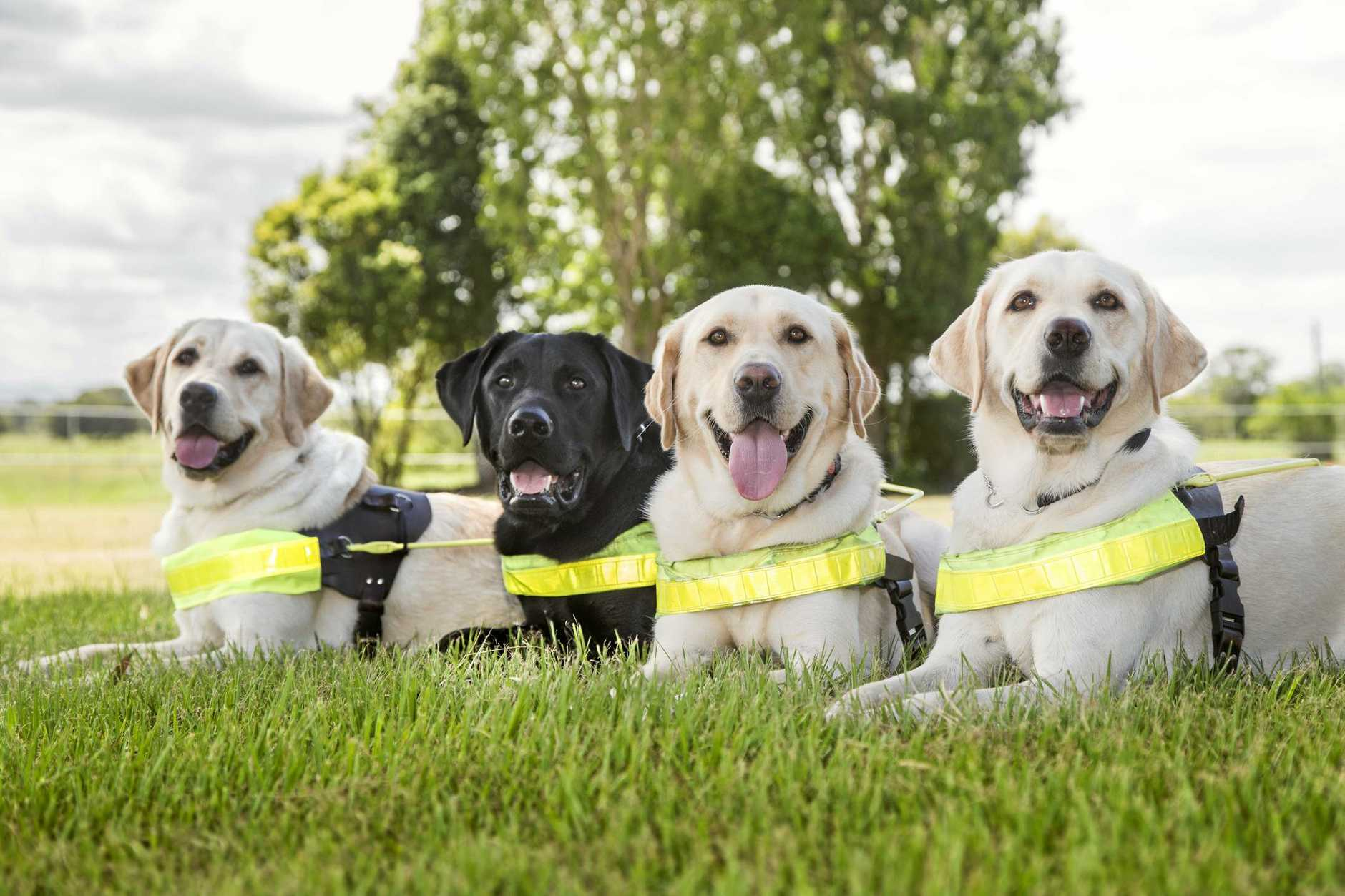 Toowoomba's new guide dog team.