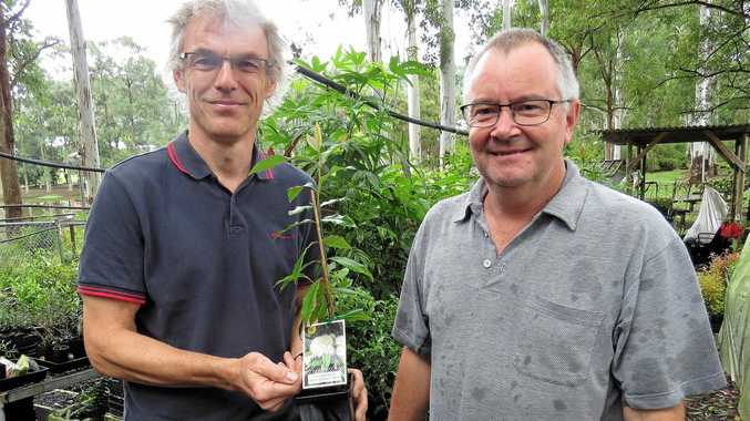 Simplyclean's Huw Jones (left) pictured purchasing a lemon myrtle tree to plant on his property from Mark Wilson at the 'Friends of the Koala' tree nursery.