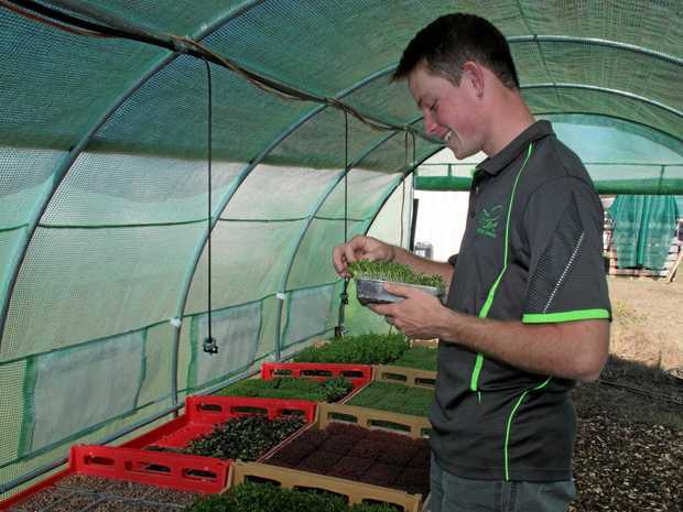 Josh Paterson, of Flare Specialty Produce, in his greenhouse.