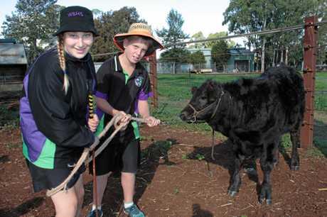 Tessa Will and Colby Samuelsen work on their cattle handling skills.