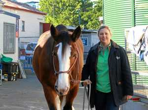 Emily is an 18-hand 1000kg Clydesdale from the Ipswich region. The eight-year-old steed belongs to Greta Stanfield from the Duggandan stud. They are pictured at the 2016 Ekka.