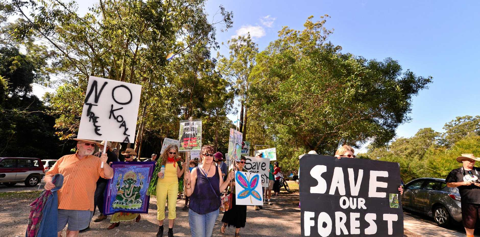 ENVIRONMENTALISTS fought hard to save a large section of the Steve Irwin Way Forest from destruction by a Bruce Highway upgrade.