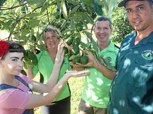 Get a taste for local avos on bus tour