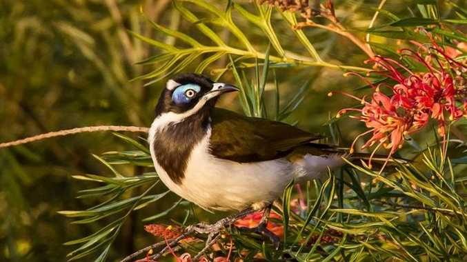 DRAWCARD: Even if you have a small backyard you can still learn how to attract local wildlife at a number of upcoming workshops on the Fraser Coast.