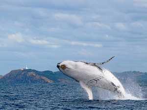 Whale watching season is here
