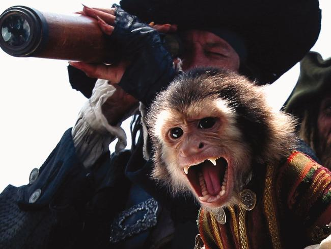 Jack the monkey had an upset stomach during filming.