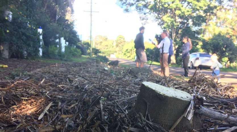 Council crews destroy trees on Urban Food Street in Buderim.