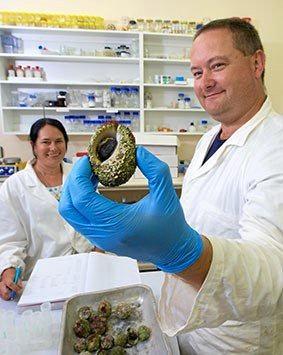 FISHY FINDINGS: Associate Professor Kirsten Benkendorff and student Peter Butcherine examine whelks for their research.