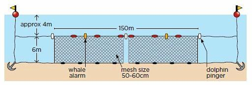 Shark nets used in NSW are 150 metres long by 6 metres deep, with a mesh size of 60 cm, set below the surface in about 10 to 12 metres of water, within 500 metres of the shore.