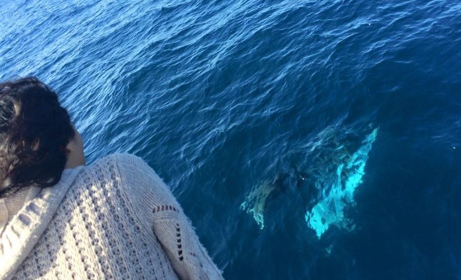 Activists claim a humpback and its calf were spotted off the north coast this week, for what is an early start to the migration season.