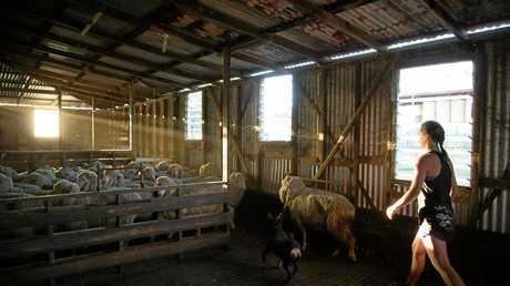 Jess Parker, wool handler for NK Shearing in Benalla, Victoria.