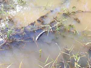 Mass pesticide dose killed fish, eels tests confirm