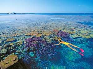UN World Heritage Committee endorses Reef protection