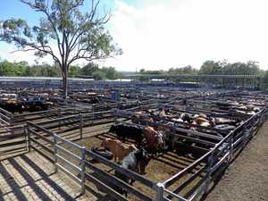 New truck wash to keep it clean at saleyards