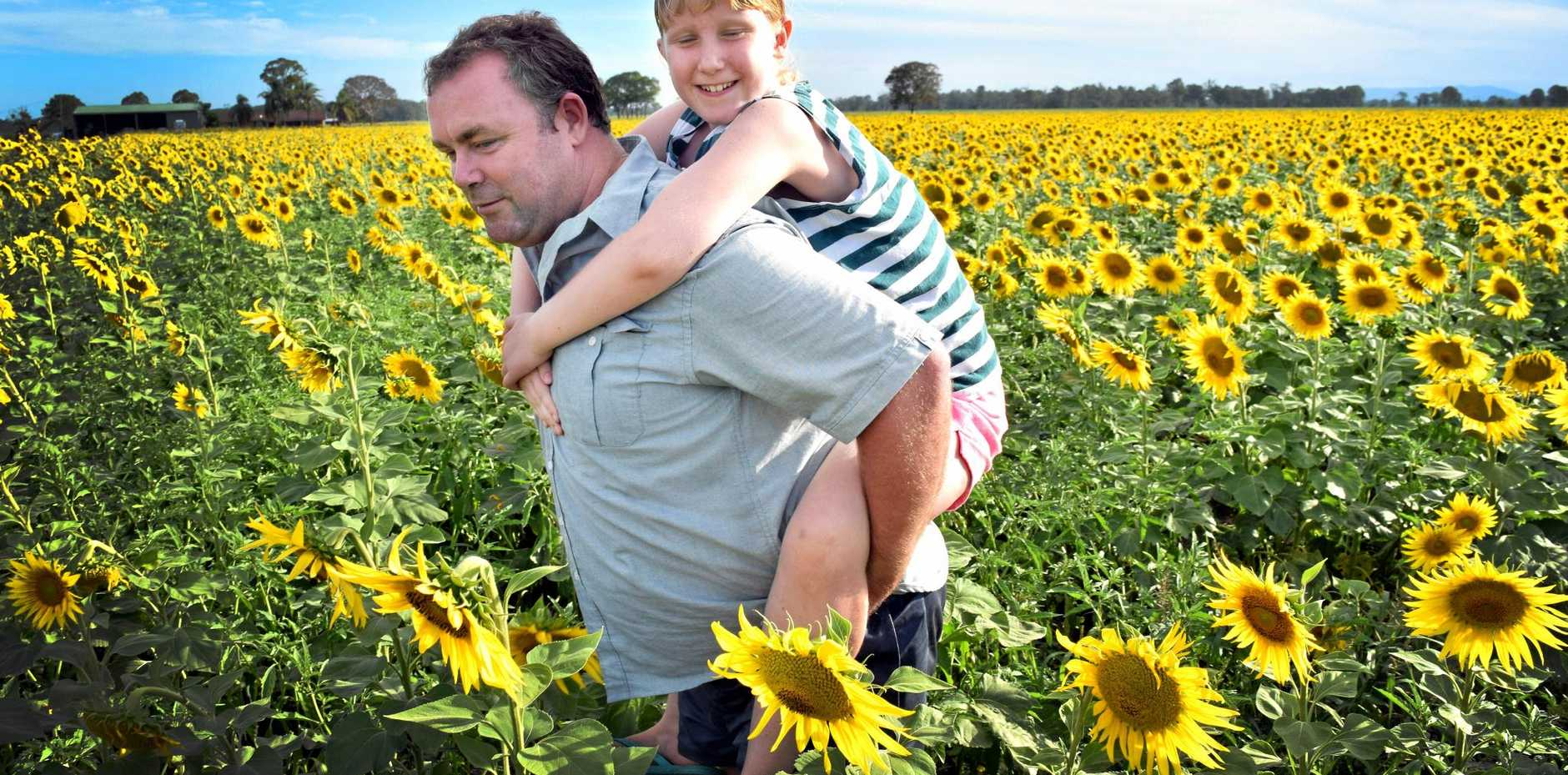 Andrew and Paige Humphreys in a sunflower field outside Casino.