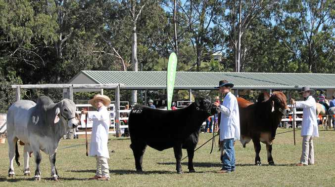 TOP FORM: Monto Cattle Club students.