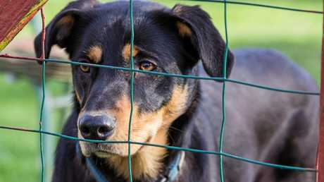 The RSPCA and vets are regularly alerted to dog baiting deaths.