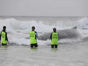 All hands on deck to help stranded whale