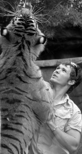 Vaughan King handling a  big cat at Australia Zoo.