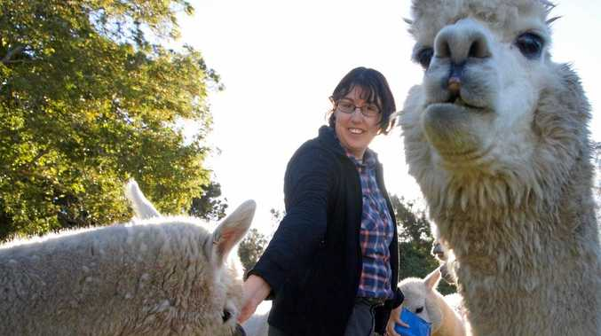 One of the public program exhibitors will be Alpaca owner Kathleen Werry.