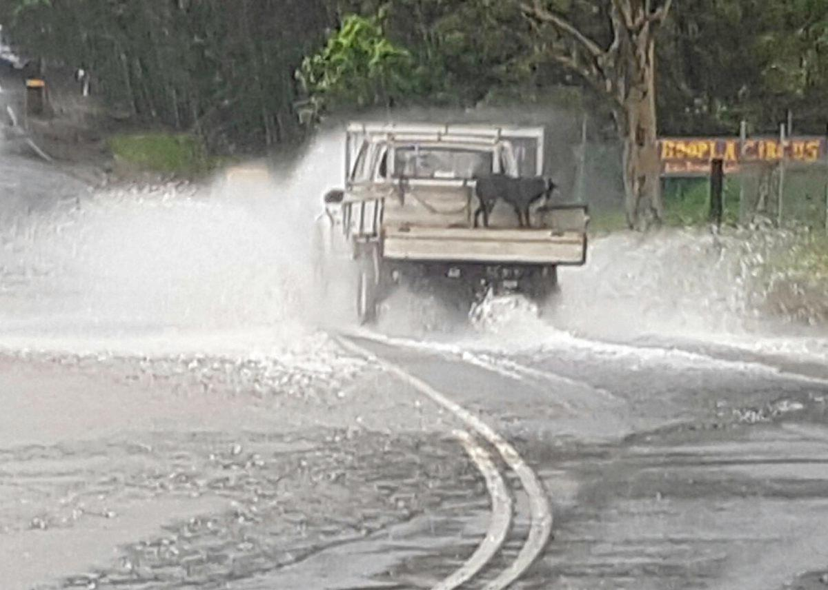 A car drives through floodwaters at Mooball St, Murwillumbah as a dog watches on. Remember, if it's flooded, forget it.