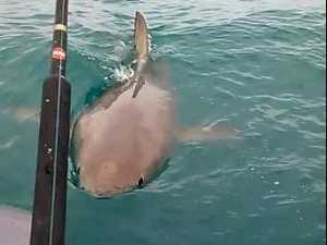 Close encounter with great white shark caught on video