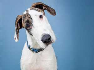 ADOPT: 16 Sunshine Coast dogs and cats looking for new home