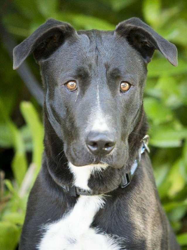 Noosa RSPCA pets for adoption   Sunshine Coast Daily