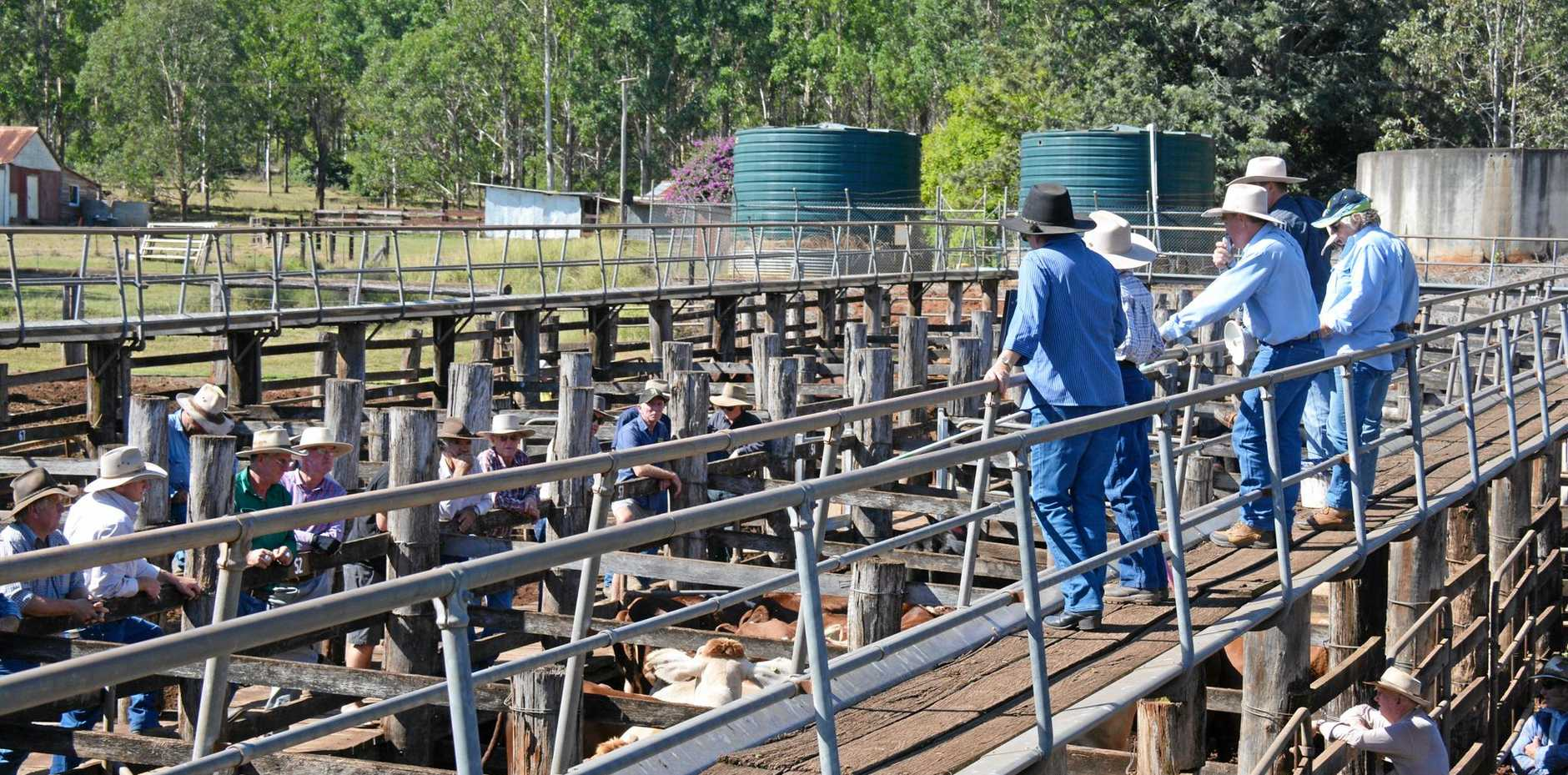 OPPORTUNITY: Expressions of interest are sought for tender of Coolabunia saleyards.