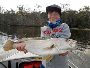 Try Maroochy River's lower reaches