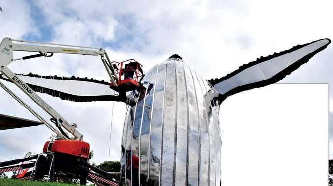MIRROR FINISH: Chris Culcutt has been giving Hervey Bay's famous Nala sculpture its first clean.