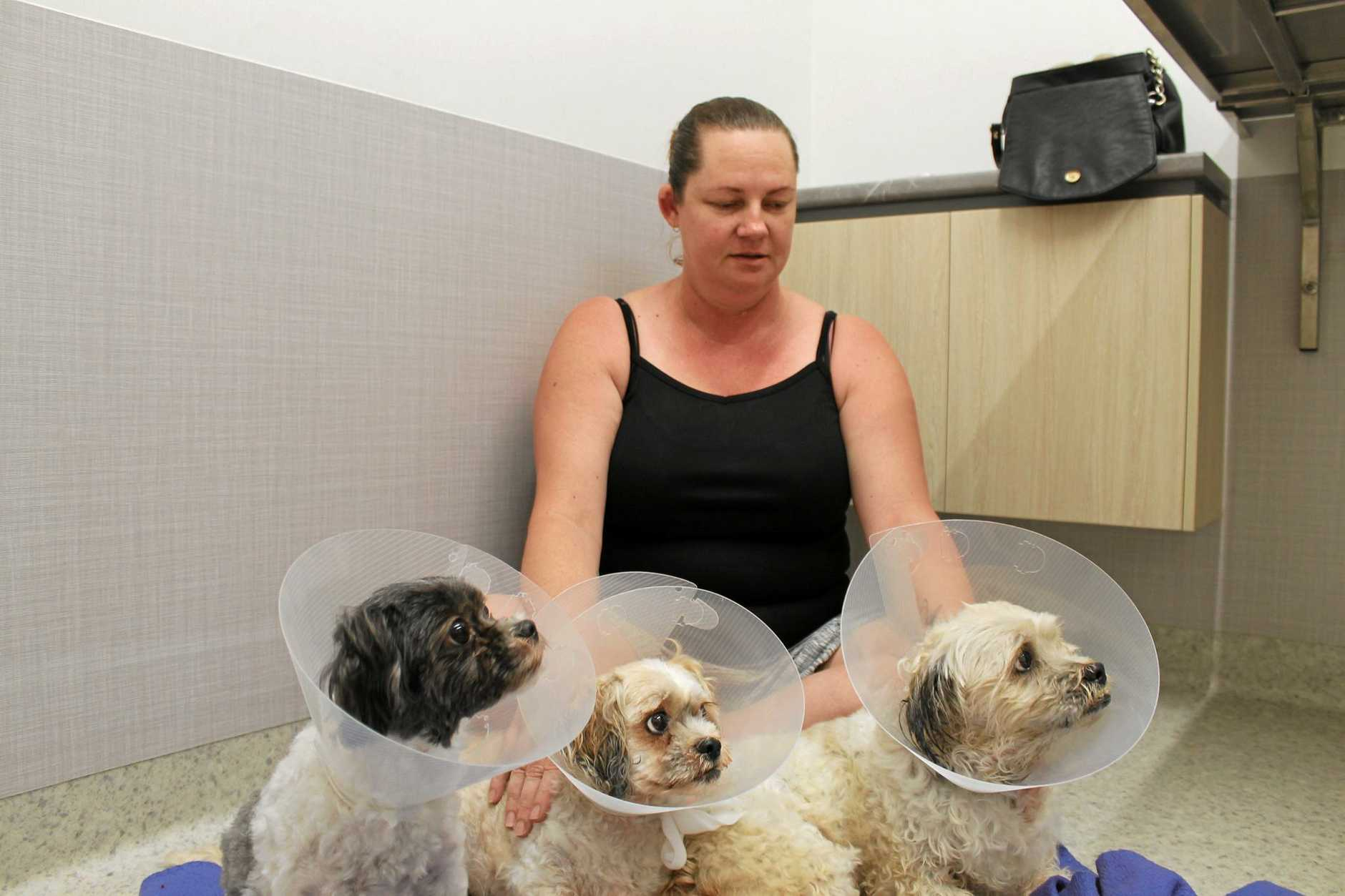Lisa La Spina from Andergrove with her furry family friends Button ,2, Wags, 8, and Bouncer, 9, who have been badly injured in a suspected chemical attack.