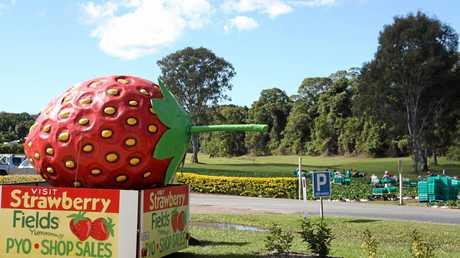 Strawberry Fields, Palmview.