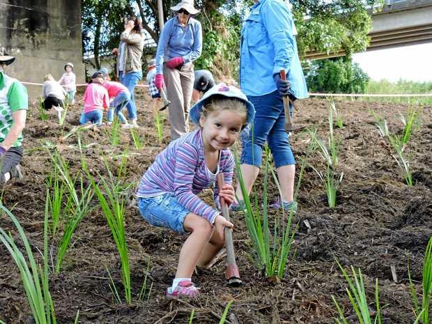 Charlotte Green at the Platypus Beach tree planting day at Mirani at the weekend.