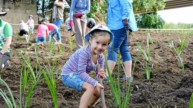 Charlotte Green at the Platypus Beach tree planting day at Mirani at the weekend.
