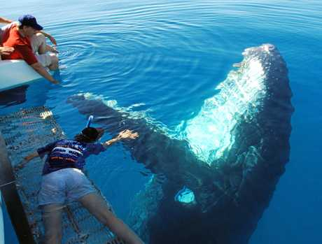 A WHALE OF A TIME: Enjoy the creatures of the deep while out with the Blue Marine Dolphin Tours.