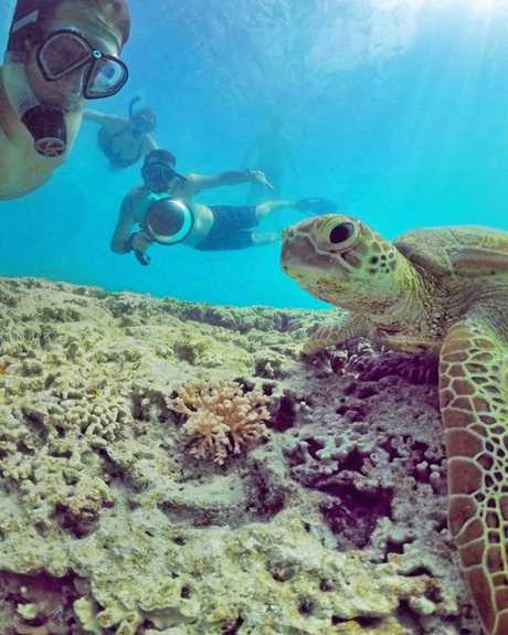Mark Fitzpatrick took an underwtaer selfie with a turtle on lady Musgrave Island during the Underwater Instameet on Saturday. Mark Fitz Photography